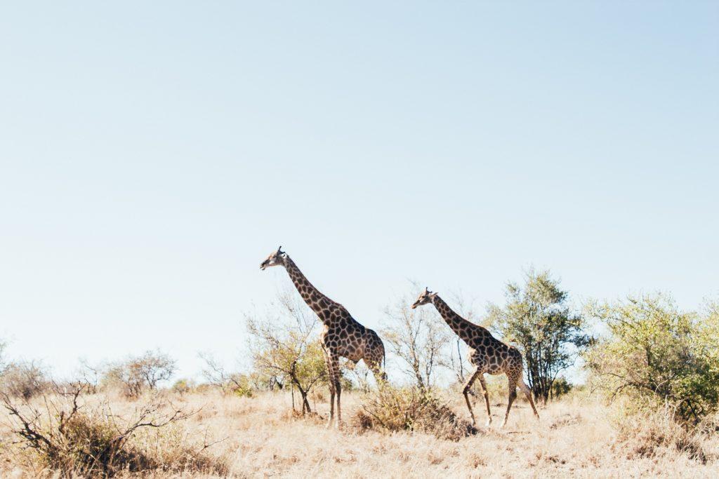 Visiter l'Afrique du Sud - Kruger National Park